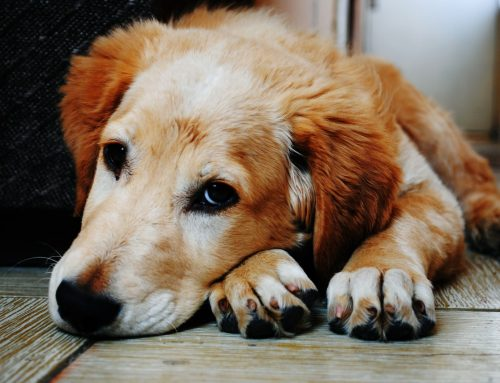 9 Common Dog Diseases All Pet Owners Should Know