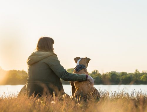 11 Reasons Owning a Dog Could Change Your Life